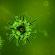 Management of the Corona Virus.